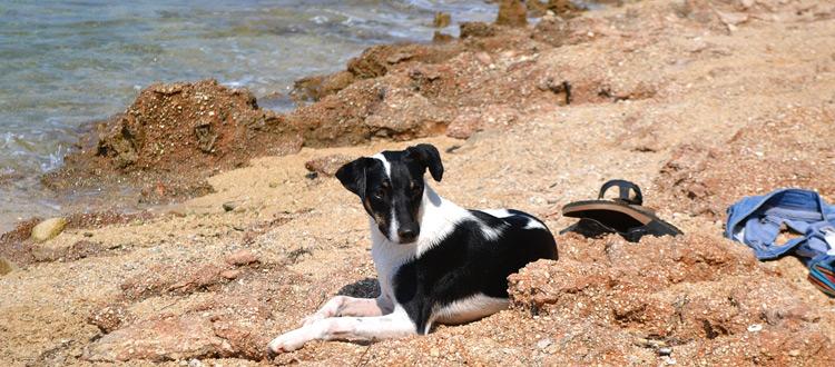 Urlaub mit Heimtieren gut vorbereiten