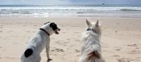 Bei Auslandsreisen mit Tieren an den Ausweis denken