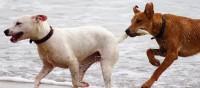 Reisen ohne Gefahr - Viele Hundebesitzer nehmen ihre Lieblinge mit in den Urlaub