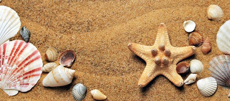 Kakteen, Schildpatt und Muscheln gehören nicht ins Urlaubsgepäck