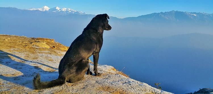 Reisen mit dem Hund - Damit lästige Parasiten den Urlaubsspaß nicht vermiesen, sind Vorsorgemaßnahmen unerlässlich