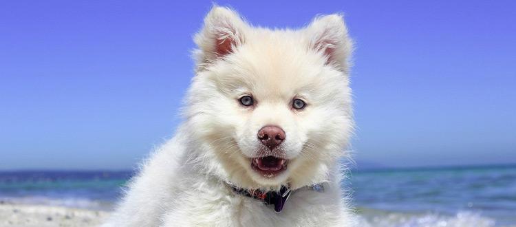 Urlaub mit Hund: Typische Fehler bei der Reiseplanung