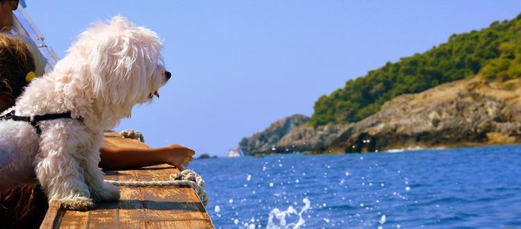 Hunde an Bord ausdrücklich erwünscht: Vierbeiner bei Locaboat Holidays