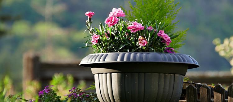 Sommer, Sonne, Pflanzen-Wonne: Drei Tipps für einen wunderbaren Sommer im eigenen Outdoor-Bereich